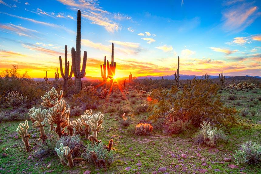 Kakteen, Arizona, Sunset