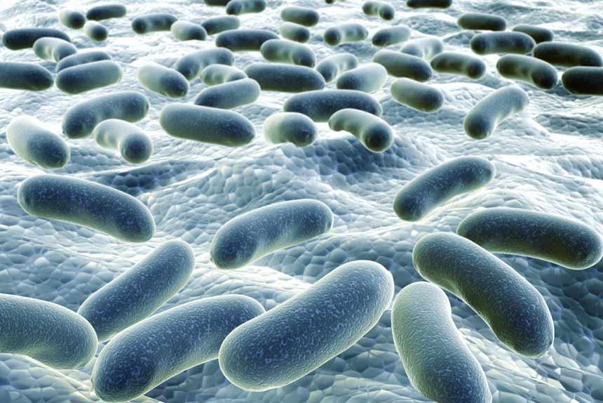 Bakterien-Kolonie
