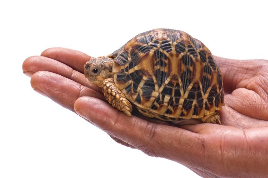 Schildkröte auf Hand