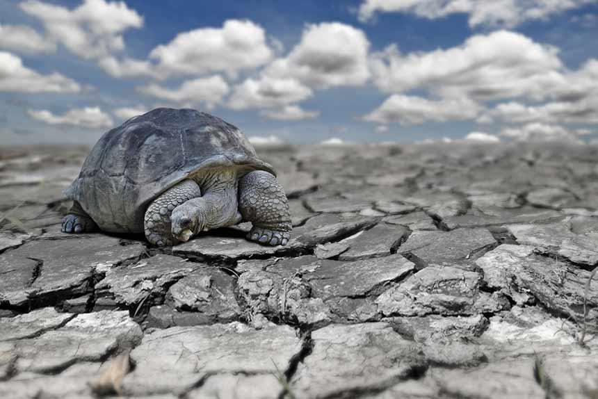 Schildkröte auf ausgetrocknetem Boden